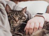 Die besten Schlaf-Tracker: Apple Watch, Fitbit, Garmin und Schlaftracker im Vergleich